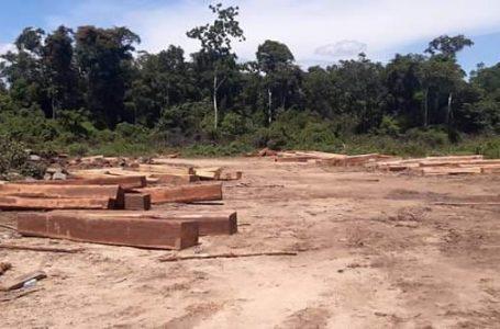 សកម្មជនព្រៃឈើ ទាមទារឲ្យ រដ្ឋាភិបាល បិទអាជីវកម្ម ក្រុមហ៊ុន Think Biotech និង Angkor flywood